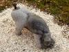 thumbs 294 quane adoring dog 1990 61x42x27 kilkenny limestone Michael Quane